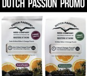 Dutch Passion PROMO - 3+1, 5+2, 7+2, 10+3, 100+5 - Auto Critical Orange Punch / Critical Orange Punch
