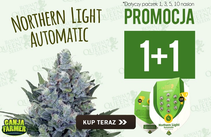 1+1 Northern Light Automatic - Royal Queen Seeds