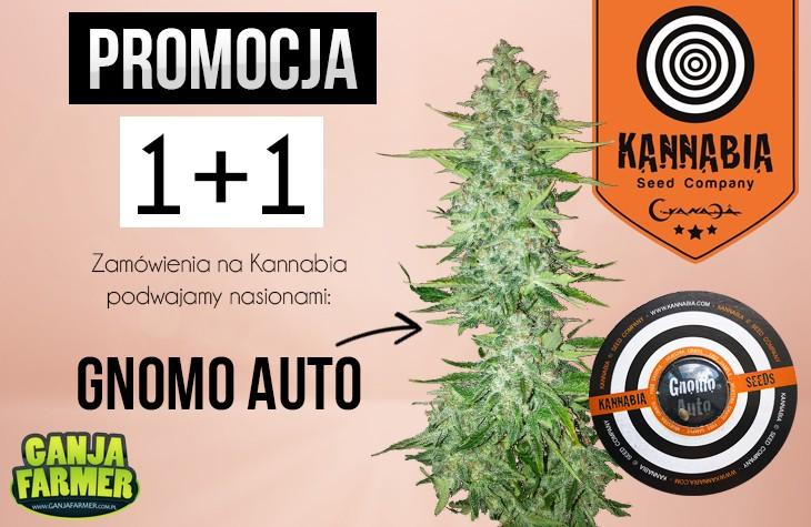 Promocja Kannabia, za każde kupione nasiono dostaniesz jeden gratis Kannabia!